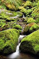 Creek with moss covered rocks - Beacon Rock State Park, North Bonneville, Washington