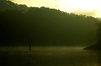 PERIYAR TIGER RESERVE, THEKKADY, KERALA, INDIA