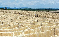 SISAL FACTORY IN MADAGASCAR, SISAL FIBERS DRYING