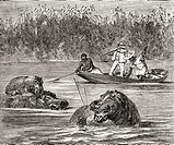 Hippopotamus hunting in Africa in the 19th century  From Africa by Keith Johnston, published 1884