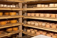 A selection of goat´s cheese wheels on shelves