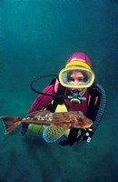 Diver and Tub gurnard (Trigla lucerna), Eastern Atlantic, Galicia, Spain
