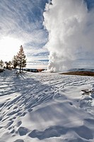 Old Faithful Geyser, Winter, Yellowstone NP, WY