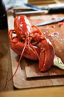 A Norway Lobster, Sweden.