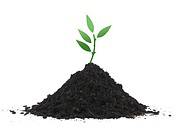 A seedling growing in soil isolated against a white background