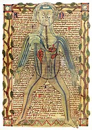 Circulatory system. Historical artwork of a human figure with internal organs and blood vessels shown. This manuscript is part of the collection gathe...
