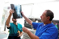 Veterinary surgery. Vets reviewing a dog´s X_ray.