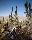 Male bow hunter and son use a spotting scope to look for moose while hunting, Eklutna Lake area, Chugach State Park, Southcentral Alaska, Autumn