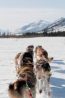 Musher´s perspective while mushing back to base camp on the North Fork of the Koyukuk River in Gates of the Arctic National Park & Preserve, Arctic Al...