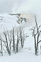 Mammoth Hot Springs, Winter, Yellowstone NP, WY
