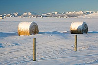 snow covered hay bales in a snow covered field with mountains in the background, okotoks, alberta, canada