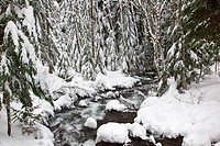 winter snow along still creek in mt. hood national forest, oregon, united states of america