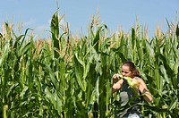 in corn field