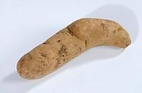 Potato, ´Bamberger, Hornchen´, Solanum, tuberosum, Bamberger, Hörnchen,