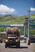 trucks loaded with raw sugar cane delivering to sugar mill, bais city, negros island, philippines