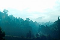 Morning view of the Nilgiri Hills, Coonoor hill station (thumbnail)