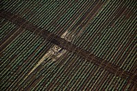 Aerial abstractive view of the agriculture fields of the northern Negev desert