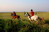 The horse race or Ghora Dabor is a traditional sporting event held on mud road or open field, right after harvesting in the winter Narail, Bangladesh ...