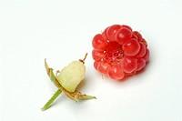 Raspberry, Rubus, idaeus,