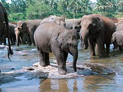 Elephant Baby Elephant Orphanage in Sri Lanka