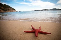 Red starfish on the beach, Ibiza, Spain