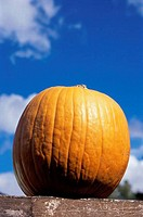 Low angle view of a pumpkin