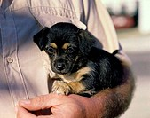 Close_up of a person holding a puppy dog