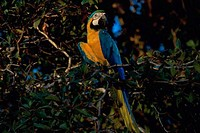 Close_up of a macaw on a tree