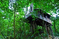Our Jungle House Accommodation  Khao Sok National Park  Suratthani Province, Thailand, Asia.