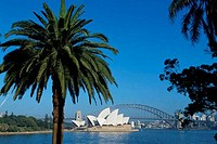 Palm trees in front of the Sydney Opera House, Sydney, Australia