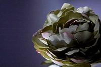 Silk flower on dark background