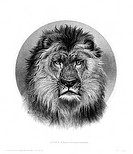 LION.Lion's head. American steel banknote engraving, c1870, after Rosa Bonheur.