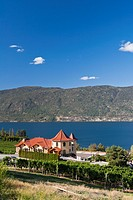 Vineyard in the Okanagan Valley, British Columbia, Canada
