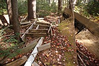 Human Impact old campsite in softwood forest along the Kancamagus Highway which is one of New England´s scenic byways in the White Mountains, New Hamp...