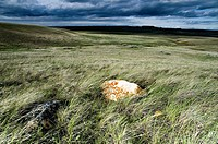 Landscape of Frenchman River valley in Grasslands National Park Saskatchewan, Canada