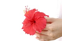 Close_up of a woman holding hibiscus flower