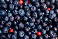 Close_up of blueberries and huckleberries