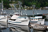 Fishing boats at a harbor, Gig Harbor, Tacoma, Pierce County, Washington State, USA
