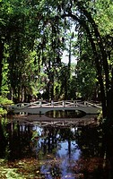 Footbridge over a lake amid trees, Magnolia Plantation and Gardens, Charleston, South Carolina, USA