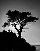 Silhouette of three people on a rock near a cypress tree
