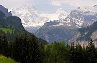 Trees in front of a snow covered mountain range, Mt Jungfrau, Bernese Oberland, Berne Canton, Switzerland