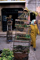Morocco, Marrakech, Souk, Chameleon And Tortoises For Sale