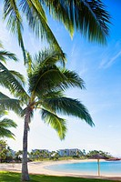 Palm Trees on The beach in Ko Olina Beach Park, Oahu, Hawaii