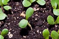 small plant macro shot