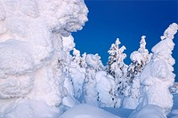 Winter forest Finland Isosyote