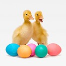Two ducks with Easter Eggs