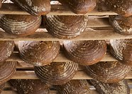 Loaves of bread in rack