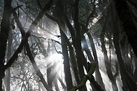 Spain, Canary Islands, La Gomera, View of laurel forest in garajonay national park