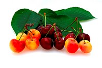 Bing And Rainier Cherries