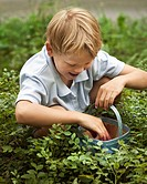 Boy picking blueberries in basket
